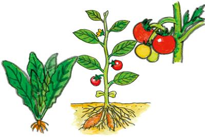 土の酸度と肥料の働き