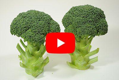 【動画あり】ブロッコリーの育て方